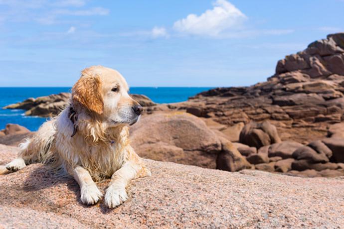 Ein ferienhaus in der bretagne mit hund mieten for Ferienhaus juist mit hund
